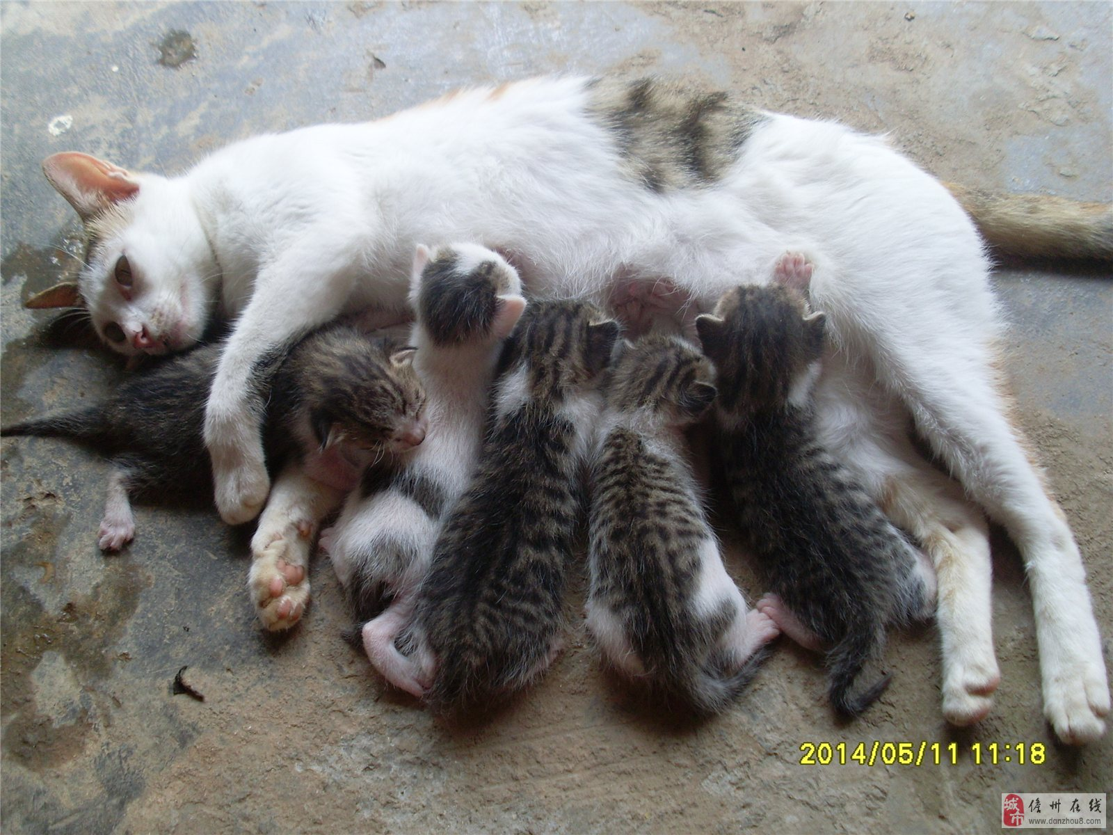 猫又可爱又是鼠类天敌,养一只家里保证你想见老鼠都难, 老鼠乱拉屎拉