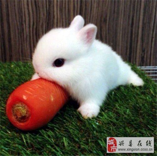 可爱小白兔_兴县在线