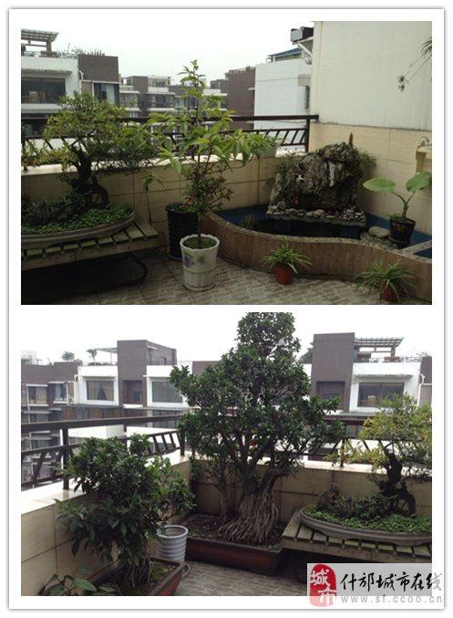 装有养鱼池,7楼装有楼顶花园,养鸟笼,小区环境优雅,小区距离学校,医院