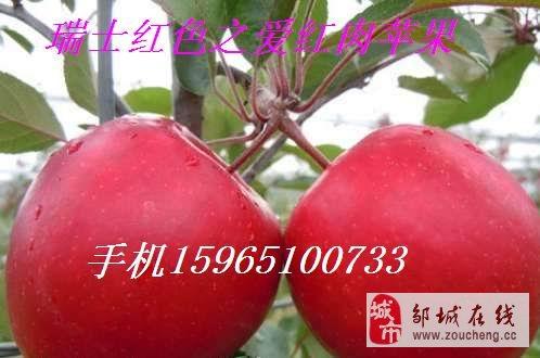山东省邹城市新品种果树苗繁育基地长期供应春雪桃苗大樱桃树苗.