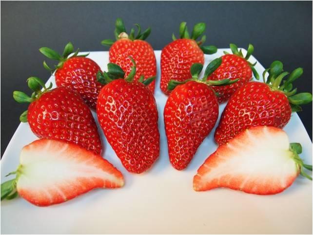 乌羊麻无土栽培草莓