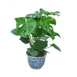最适合室内摆放的三类植物图片