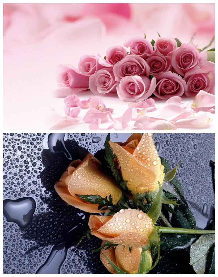 浅粉色玫瑰表示优雅,高贵和钦佩;深紫色玫瑰表示感谢;通常暗颜色玫瑰
