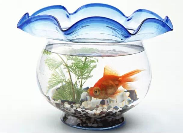 鱼缸不用很大,但里面需要的东西绝不能少.