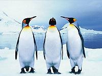 8蓬莱极地海洋世界