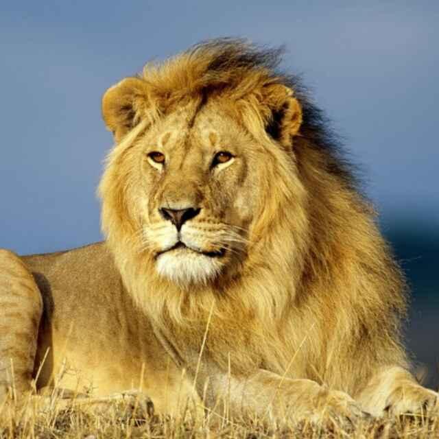 博远-狮王